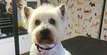 full works dog grooming hereford