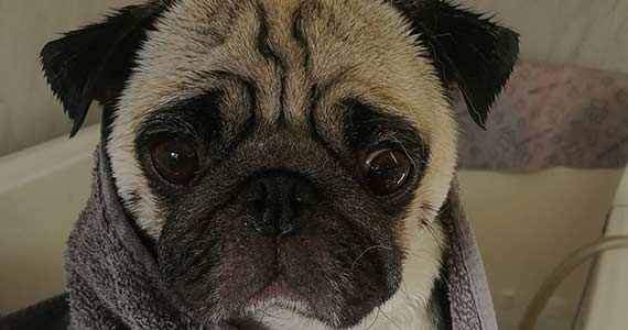 nagayu spa treatment hereford