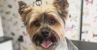 pupping pampering in hereford
